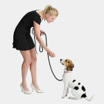 nylon dog leash animal-care special offer best deals buy one lk sri lanka 1453789373.jpg